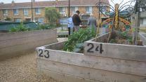 Buna Reserve Community Garden 2012