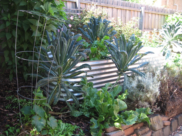 edible garden with tuscan kale